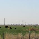 Ochiltree County_Gas Plant with Cows